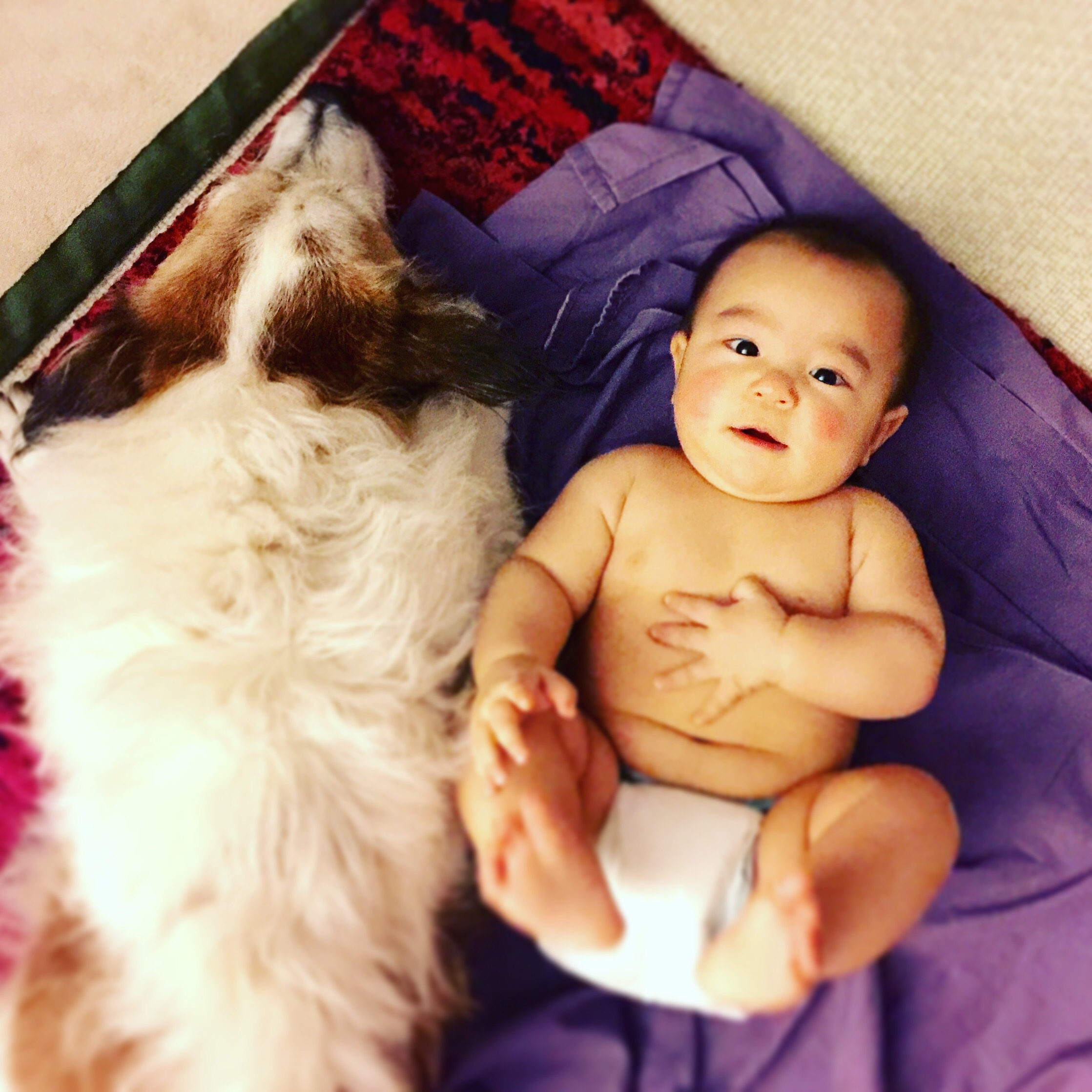 A baby with a dog