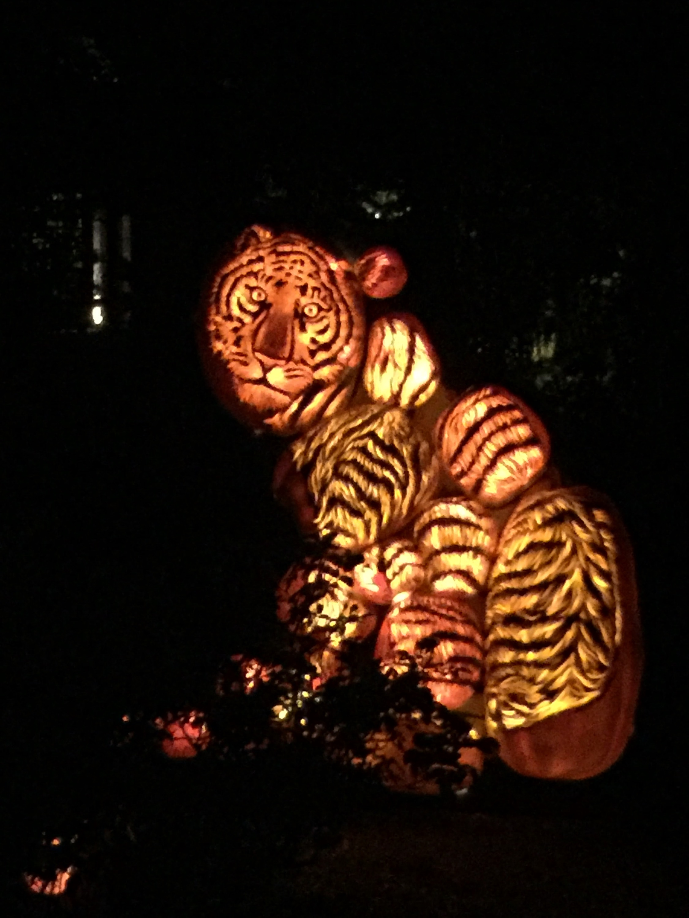 Tiger: pumpkins
